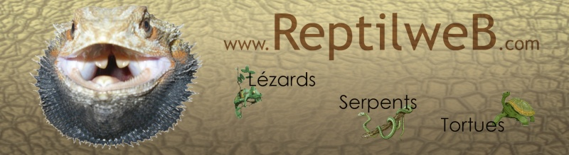 ReptilweB