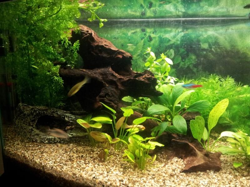 Bac 90l ré-organisé et en cours de plantation Aquari11