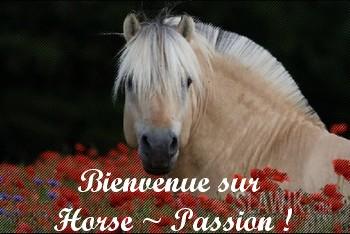 Horse ~ Passion