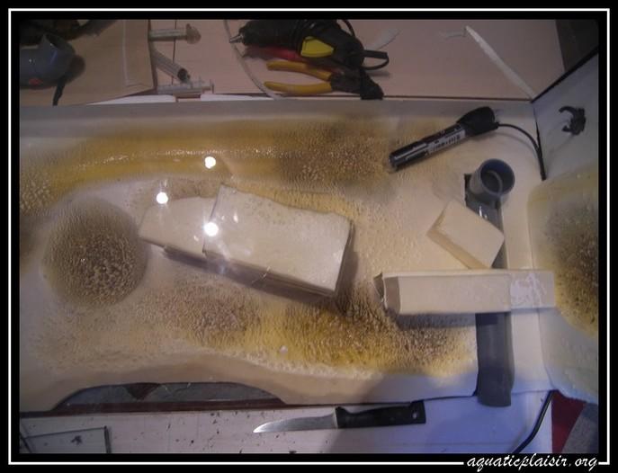 Mon aquaterrarium 100_5012
