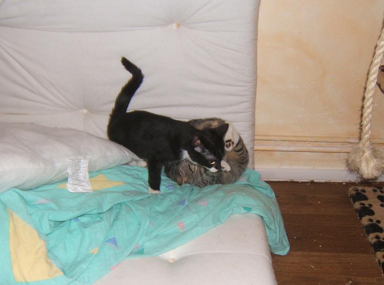 Maya et Sury, 2 fifilles nées le 7 septembre 2009 (4 mois) Sury_e15