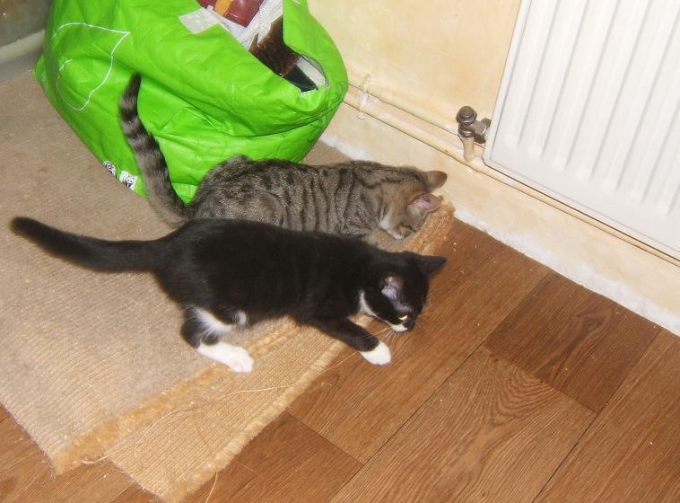 Maya et Sury, 2 fifilles nées le 7 septembre 2009 (4 mois) Sury_e16