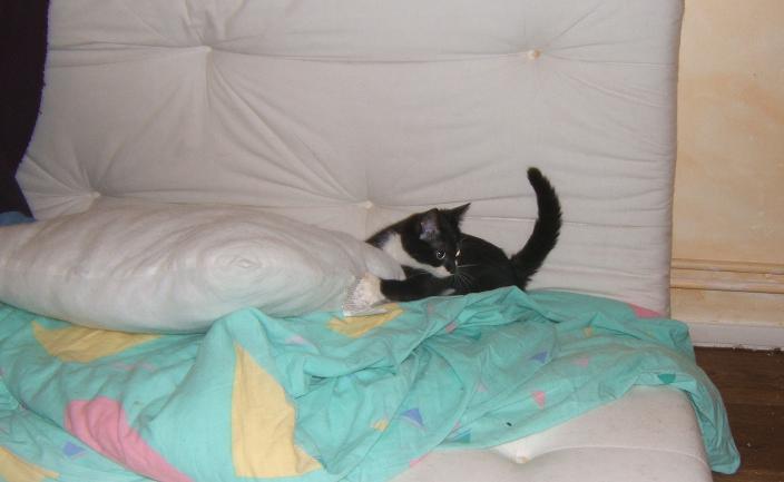 Maya et Sury, 2 fifilles nées le 7 septembre 2009 (4 mois) Sury_e17