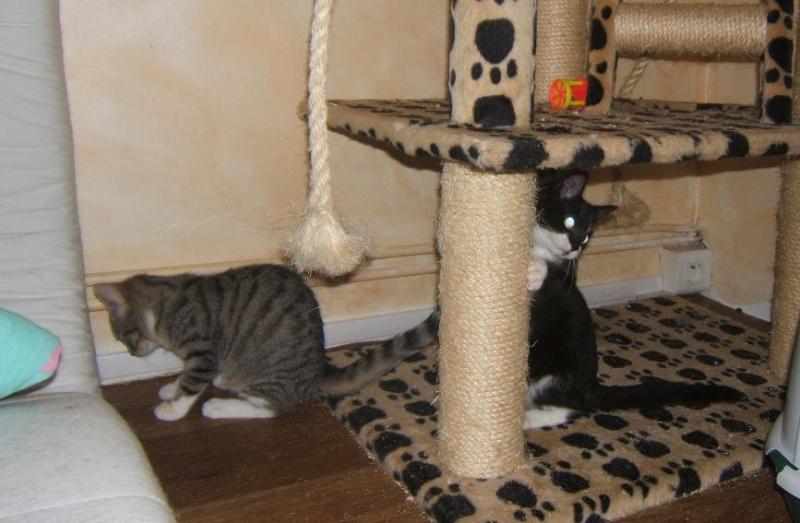 Maya et Sury, 2 fifilles nées le 7 septembre 2009 (4 mois) Sury_e20
