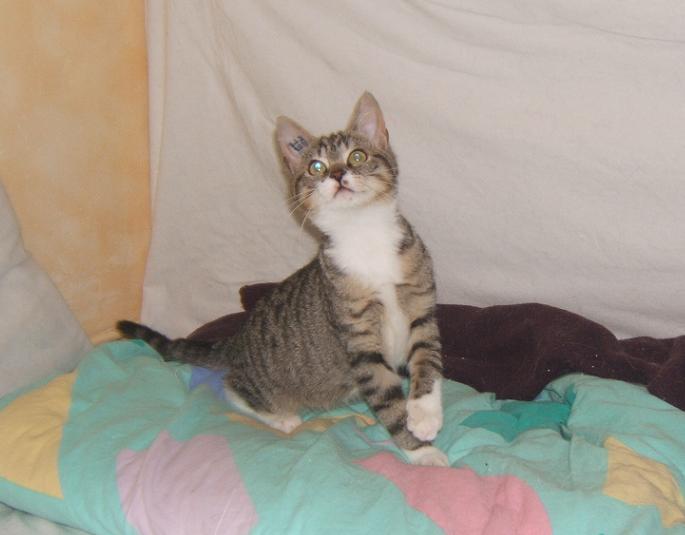 Maya et Sury, 2 fifilles nées le 7 septembre 2009 (4 mois) Sury_e23