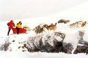 Antartica, prisonniers du froid 18602010