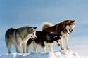 Antartica, prisonniers du froid 18602011