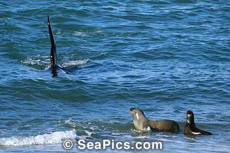 Qui es cette orque? 00278810