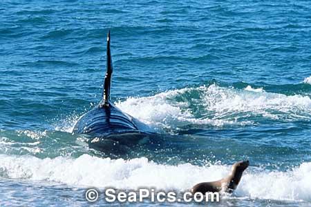 Qui es cette orque? 00826510