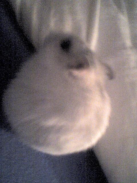Mes rats Image115