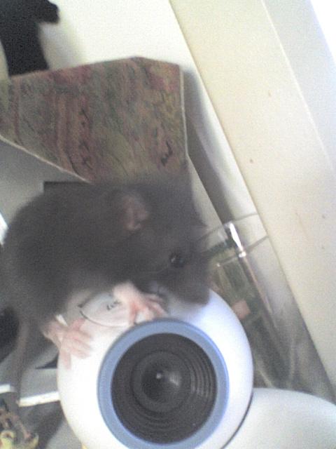 Mes rats Image211