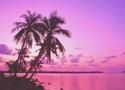 × Textures roses et violettes × Khjgc_10