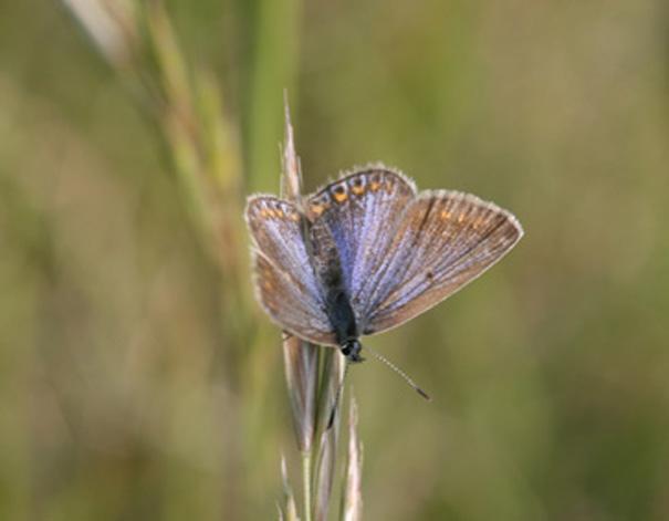 Papillon Img_3710