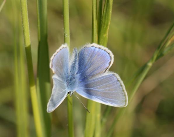 Papillon Img_3711