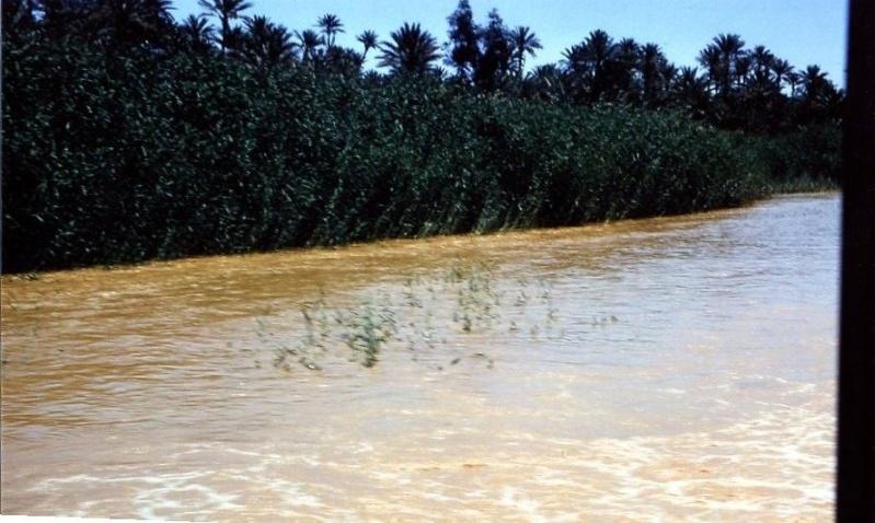 inondations au sahara - Page 2 Img29510