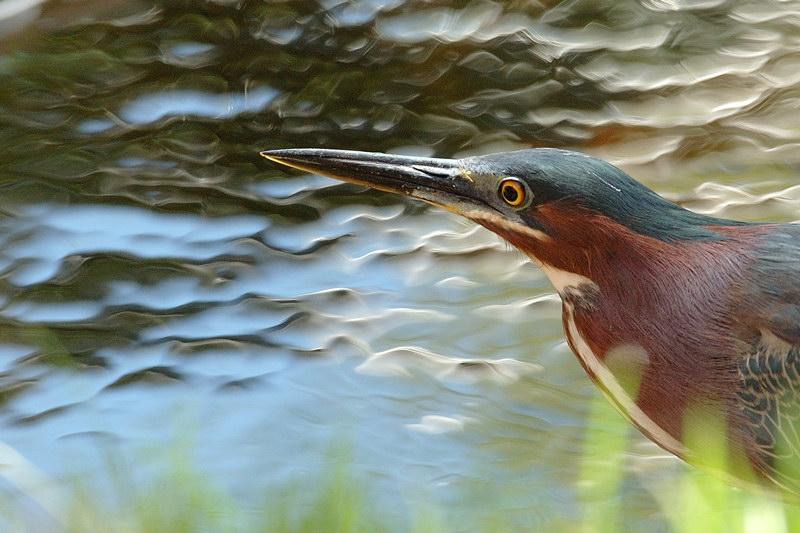 PhotoCritik - Portail Heron_11