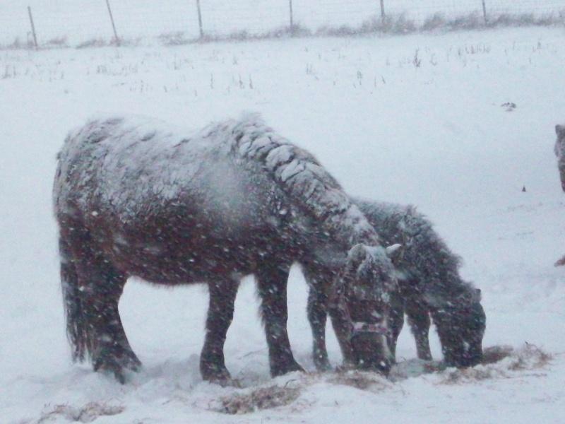sous la neige 100_1213