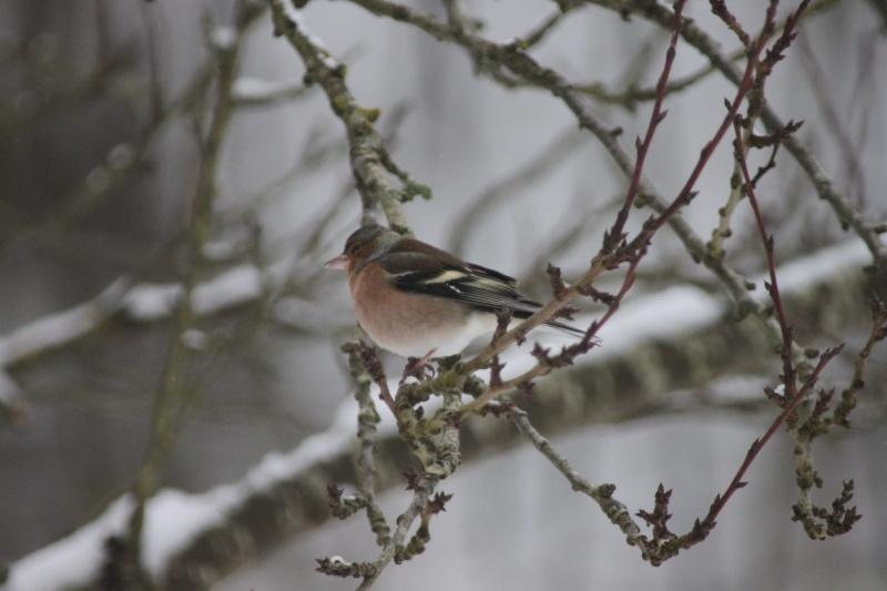 il neige, pensons à nos petits amis de la nature Img_1612