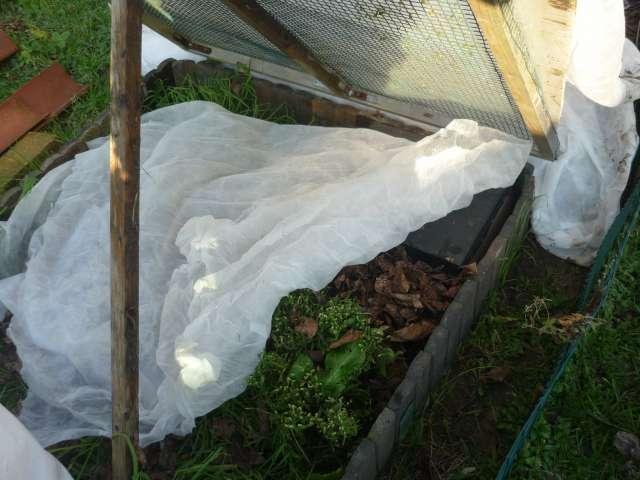 Exemple protection hibernation in natura au Nord de la Loire La_fam17