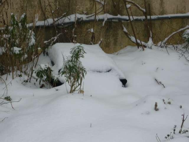 Exemple protection hibernation in natura au Nord de la Loire La_fam45
