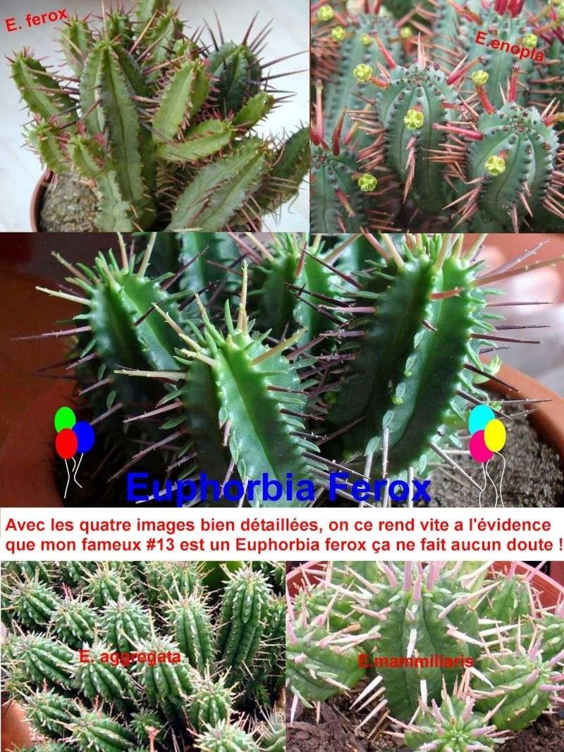 Cactées et succulentes [trouvé!] Ephorb10