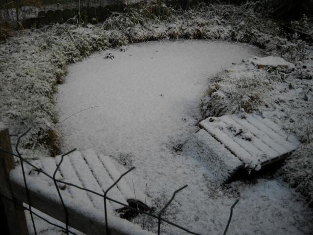 les bassins à tortues en hiver Bassin11