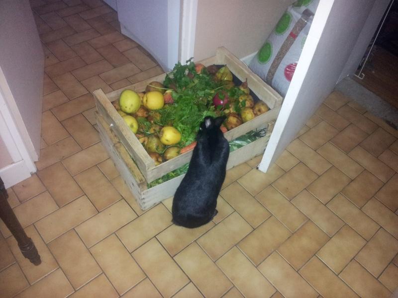 Olive, lapine noire, jeune - Page 23 20121217