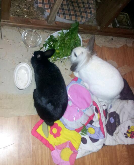Olive, lapine noire, jeune - Page 23 20121221