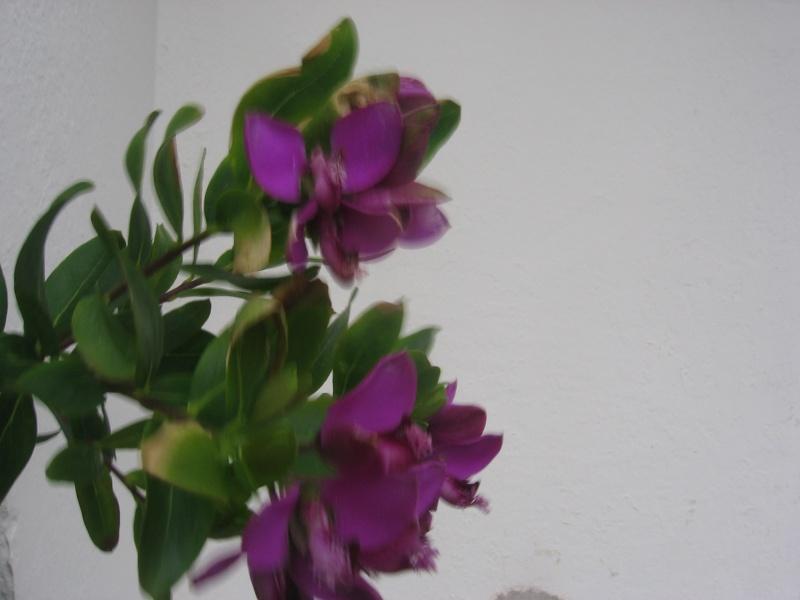 Les fleurs de Noël Img_2520