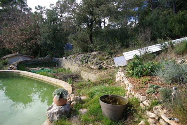 Quelques photos de mon jardin : gros projet 2013 : Evolution Mai 2014 - Page 2 Imgp5520
