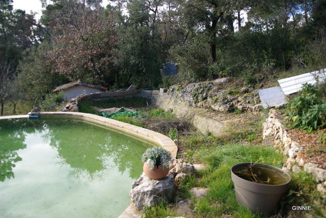 Quelques photos de mon jardin : gros projet 2013 : Evolution Mai 2014 - Page 2 Imgp5521