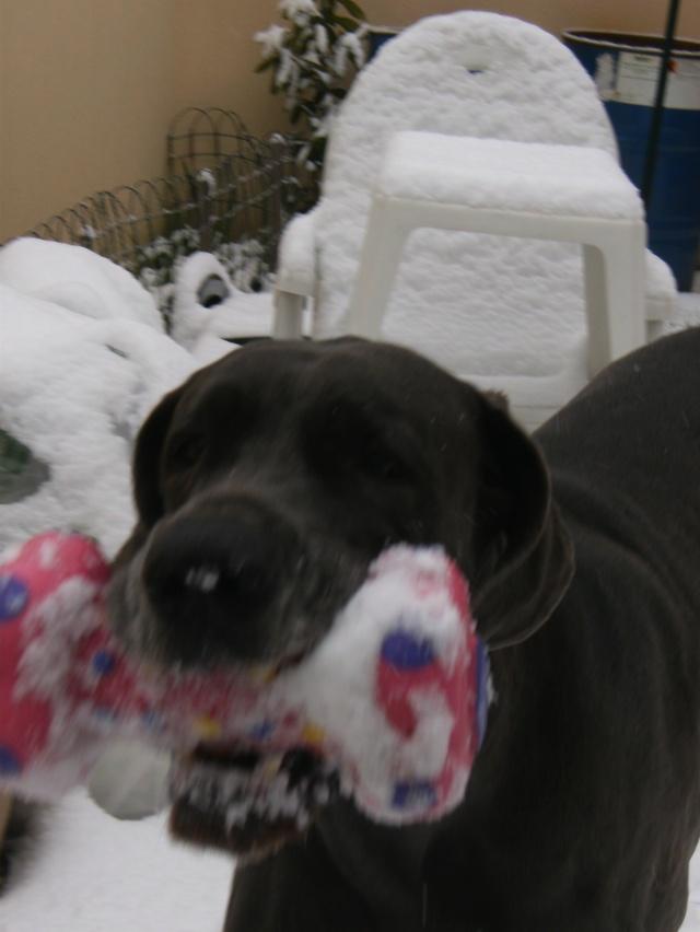 Vanda le 17.12.2009 avec un debut de neige Hpim5114