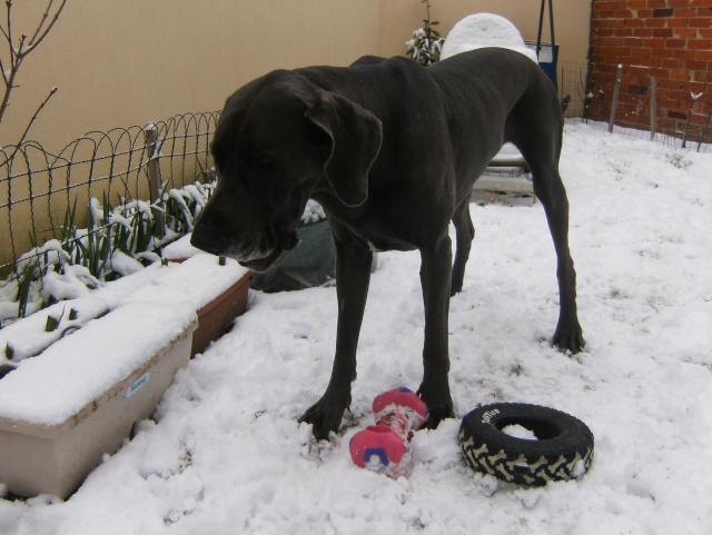 Vanda le 17.12.2009 avec un debut de neige Hpim5118