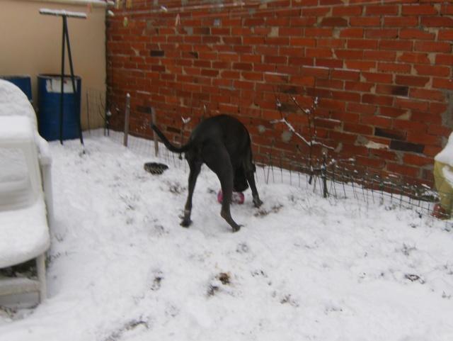 Vanda le 17.12.2009 avec un debut de neige Hpim5119