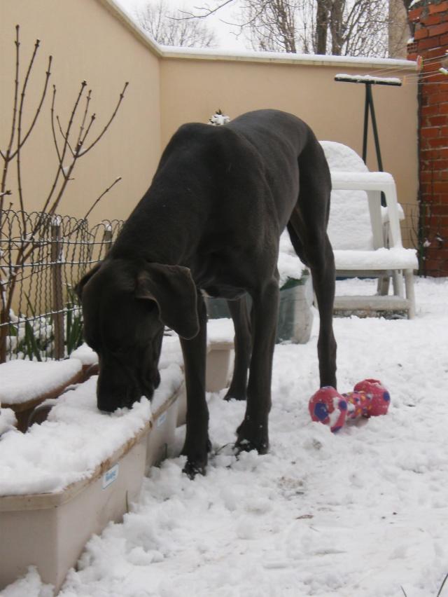 Vanda le 17.12.2009 avec un debut de neige Hpim5120