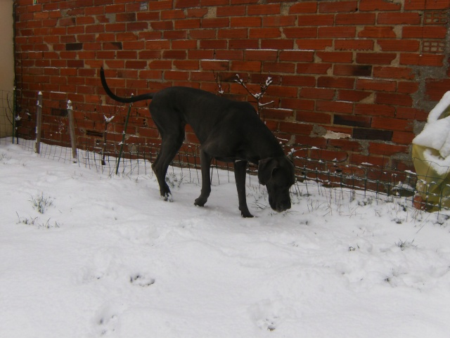 Vanda le 17.12.2009 avec un debut de neige Hpim5122