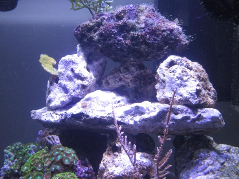 Nano eau de mer - Page 2 Img_0813