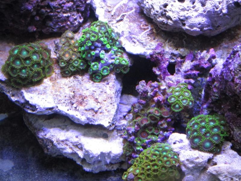 Nano eau de mer Zozo_110