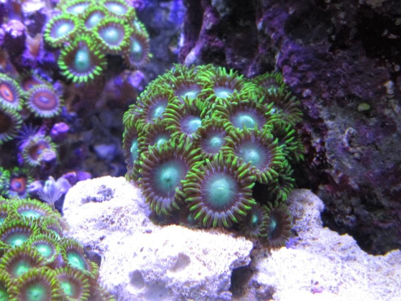 Nano eau de mer Zozo_210