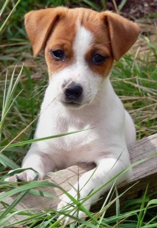 Your favourite kind of dog?? Jackru10