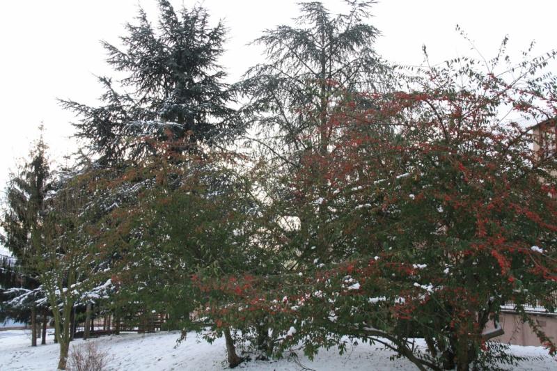 Vive la neige à Wangen ! Img_7914