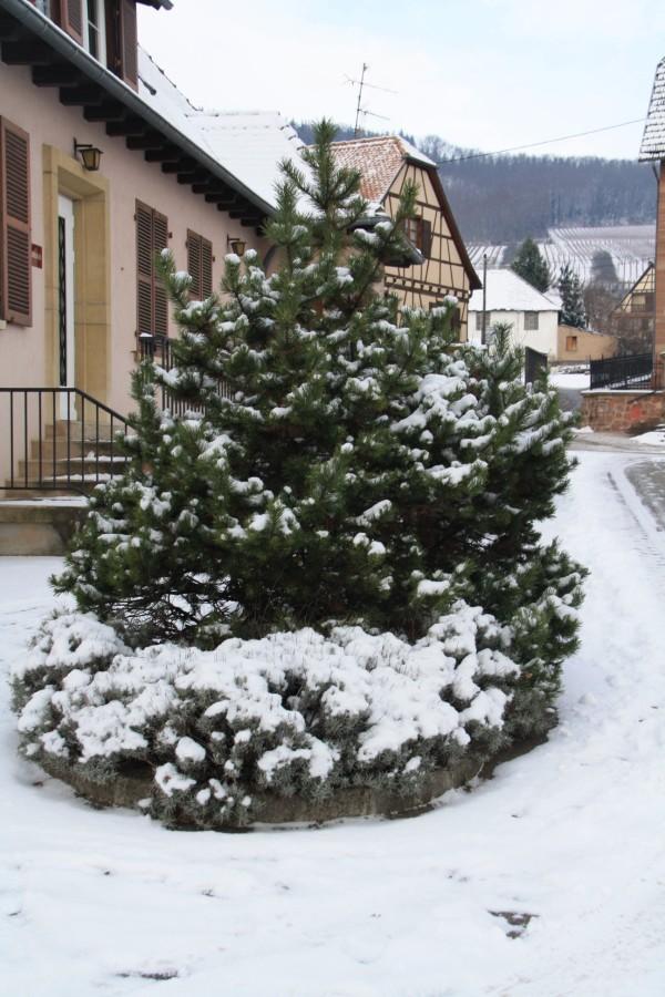 Vive la neige à Wangen ! Img_7915