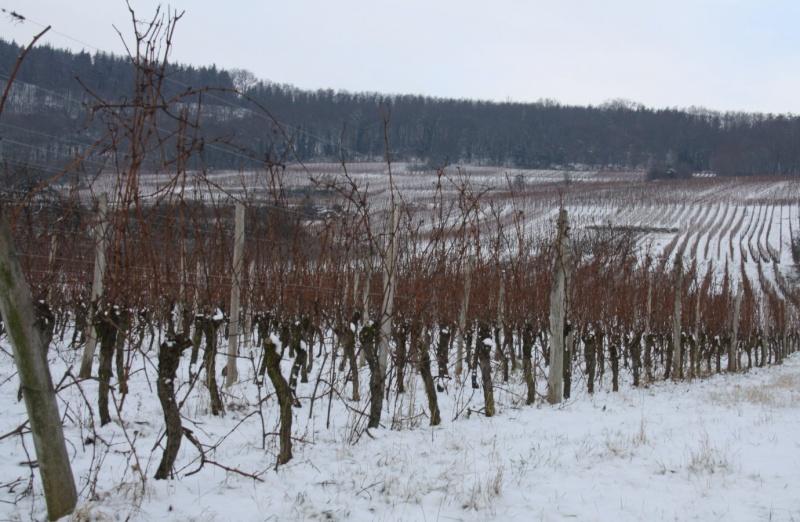 Vive la neige à Wangen ! Img_7918
