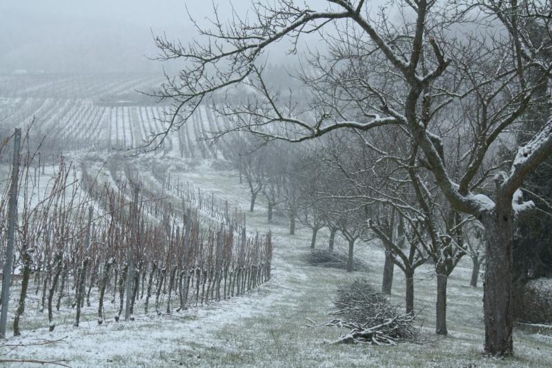 Vive la neige à Wangen ! Img_8113