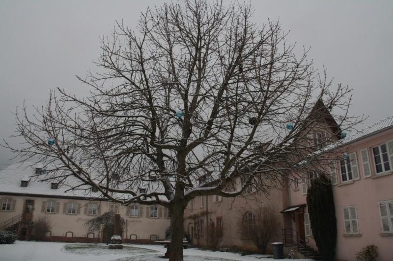 Vive la neige à Wangen ! Img_8120