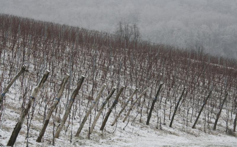 Vive la neige à Wangen ! Img_8126