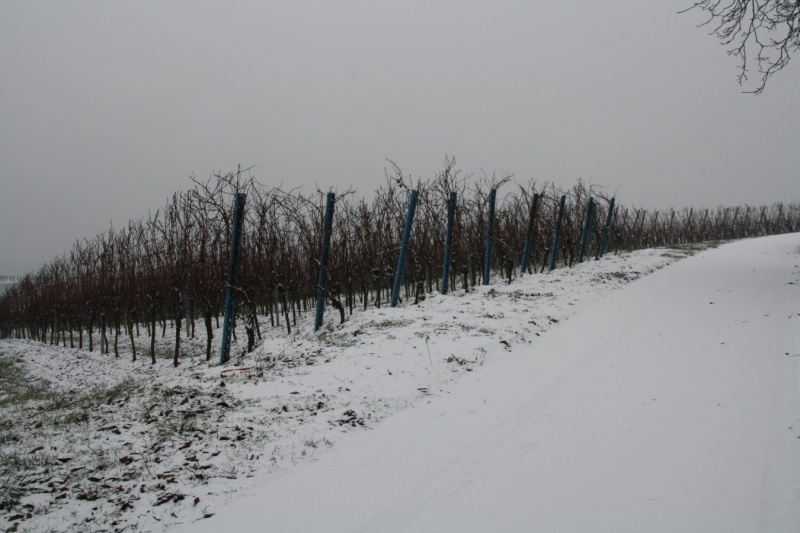 Vive la neige à Wangen ! Img_8129