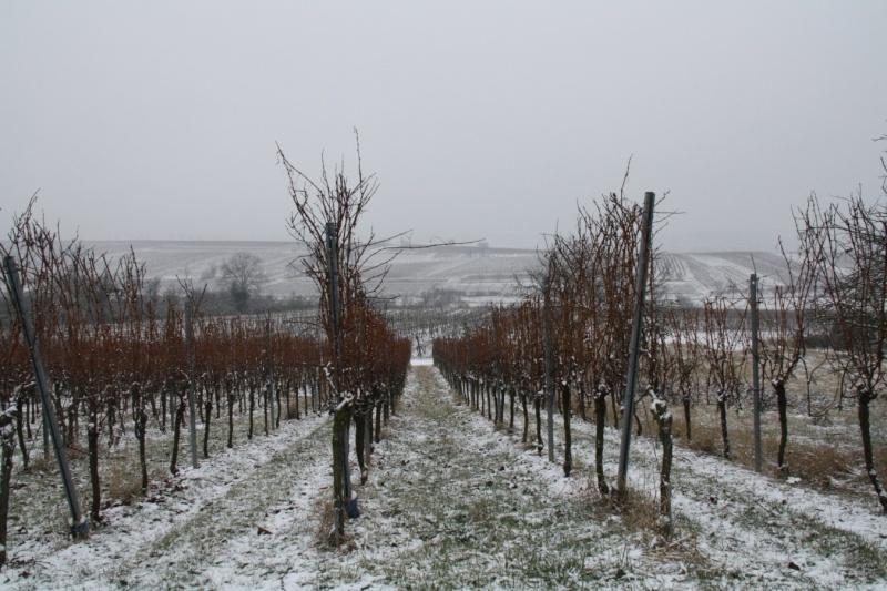 Vive la neige à Wangen ! Img_8130