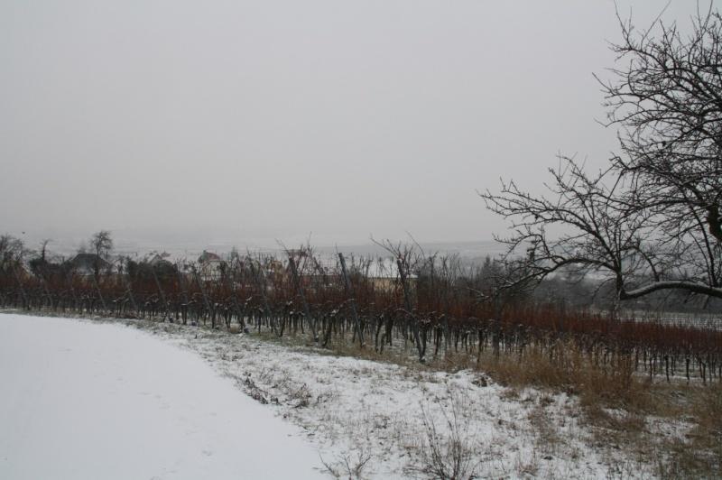 Vive la neige à Wangen ! Img_8131