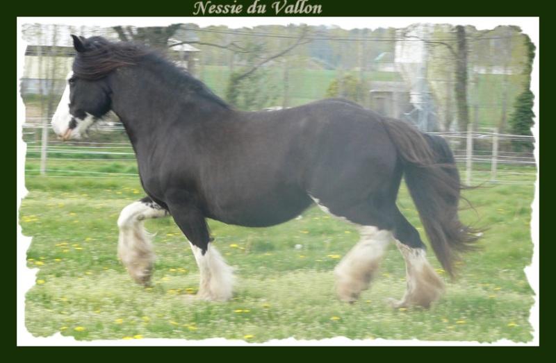 Elevage du Domaine de Rochefort - 02/09/09 Nessie11